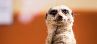 What Can The Meerkats Ad Campaign Teach You About Fund Marketing?